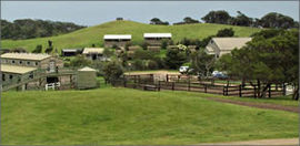 Ace Hi Riding Ranch - Accommodation Burleigh