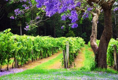 Bago Vineyards - Accommodation Burleigh