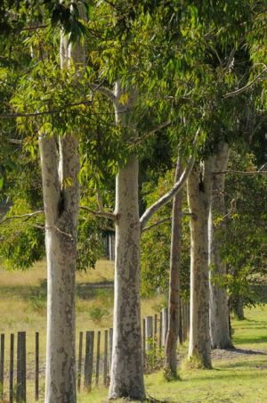 Stringybark Cottages - Accommodation Burleigh