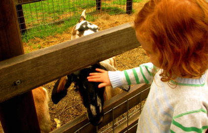 Collingwood Children's Farm - Accommodation Burleigh