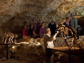 Naracoorte Caves National Park - Accommodation Burleigh