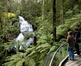 Great Otway National Park - Accommodation Burleigh