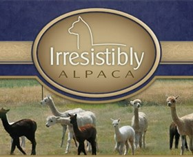 Marchmont Park Alpacas - Accommodation Burleigh