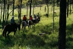 Hunter Valley Horse Riding and Adventures - Accommodation Burleigh