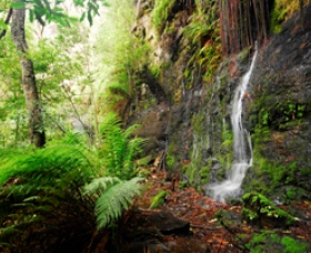 Fairy Bower Falls - Accommodation Burleigh