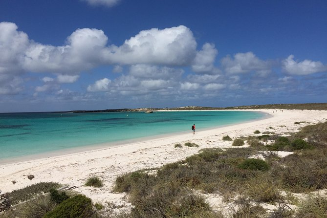 Abrolhos Island Half Day Fly and Flipper - Accommodation Burleigh