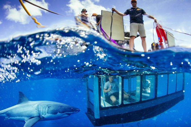 White Shark Tour with Optional Cage Dive from Port Lincoln - Accommodation Burleigh