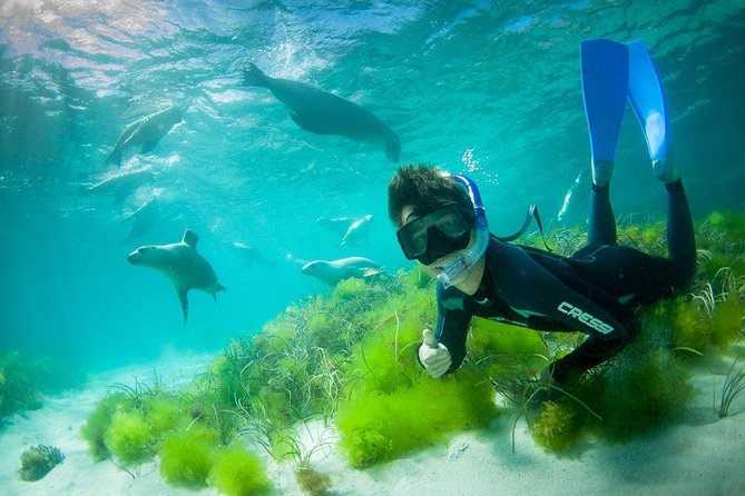 Half-Day Sea Lion Snorkeling Tour from Port Lincoln - Accommodation Burleigh