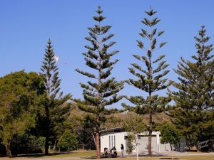 Kurrawa Park - Accommodation Burleigh