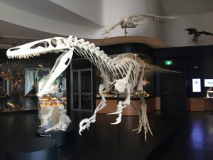 UNE Natural History Museum - Accommodation Burleigh