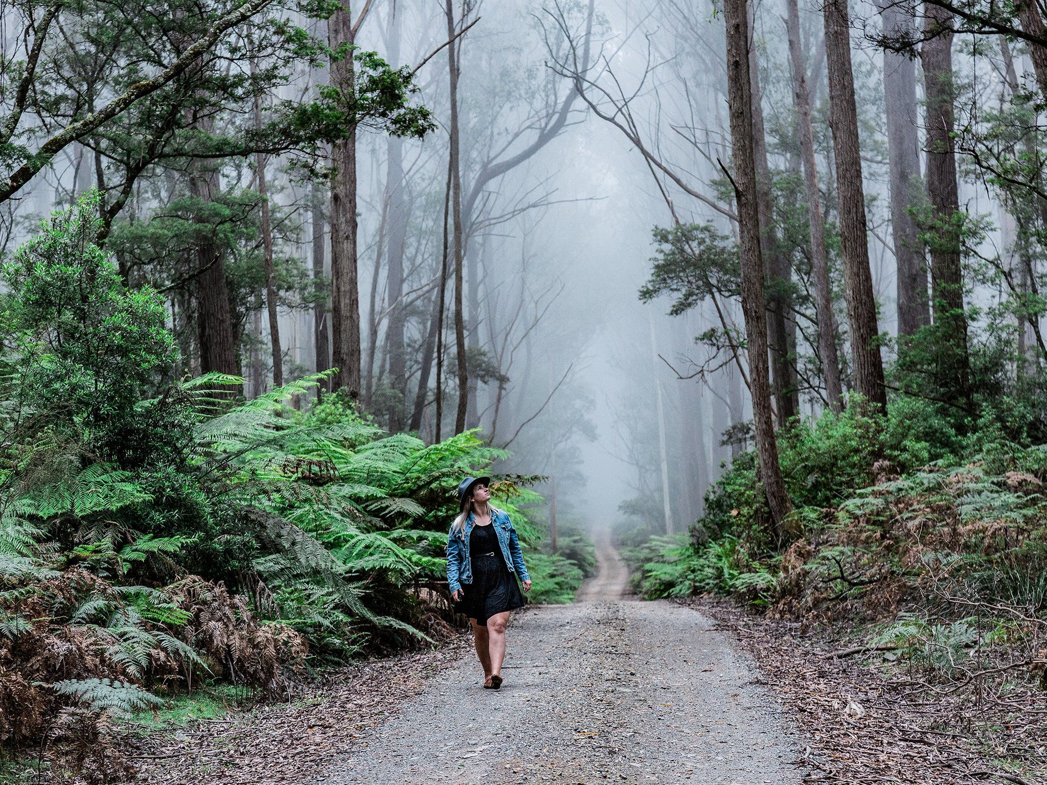 The Corn Trail Walking Track - Accommodation Burleigh