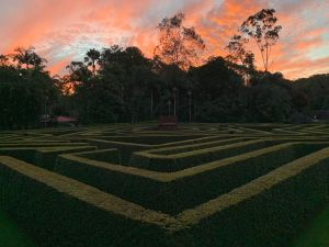 Bellingham Maze - Accommodation Burleigh