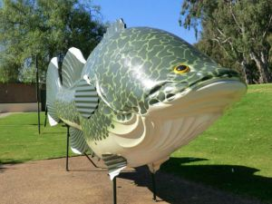 Big Murray Cod - Accommodation Burleigh