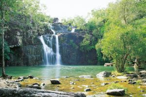 Cedar Creek Falls - Accommodation Burleigh