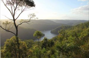 Great North walk - Berowra Valley National Park - Accommodation Burleigh