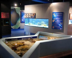 Marine and Freshwater Discovery Centre - Accommodation Burleigh