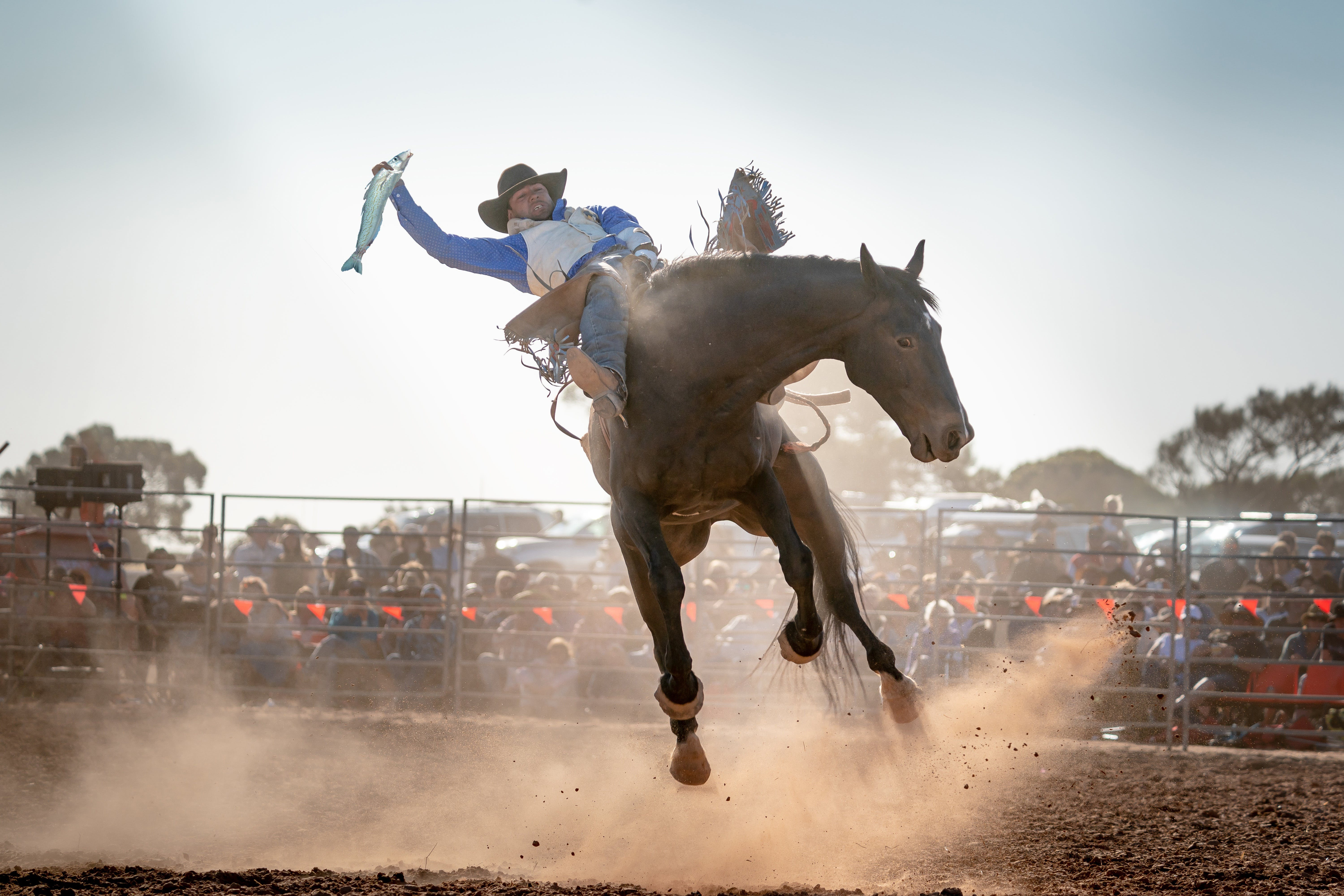 Rodeo by the Sea - Streaky Bay - Accommodation Burleigh